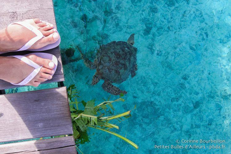Je dois me contenter de regarder les tortues depuis le ponton... Derawan, Bornéo, Indonésie, juillet 2009.