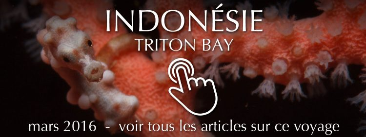 Diving trip to Triton Bay, Papua, Indonesia. March 2016.