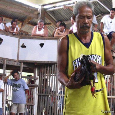 Combats de coqs à Siquijor. Philippines, février 2008.