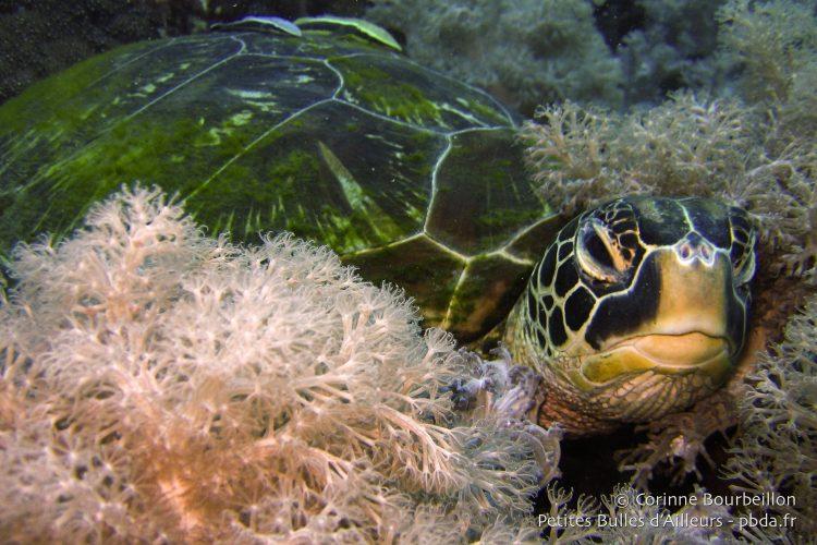 Tortoise. Philippines, March 2008.