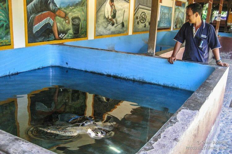 Dans les bassins de Reef Seen, il y a aussi deux tortues adultes. Le centre a tenté plusieurs fois de les remettre dans leur milieu naturel, mais chaque fois, elles sont revenues ! (Pemuteran, Bali, Indonésie, juillet 2008.)