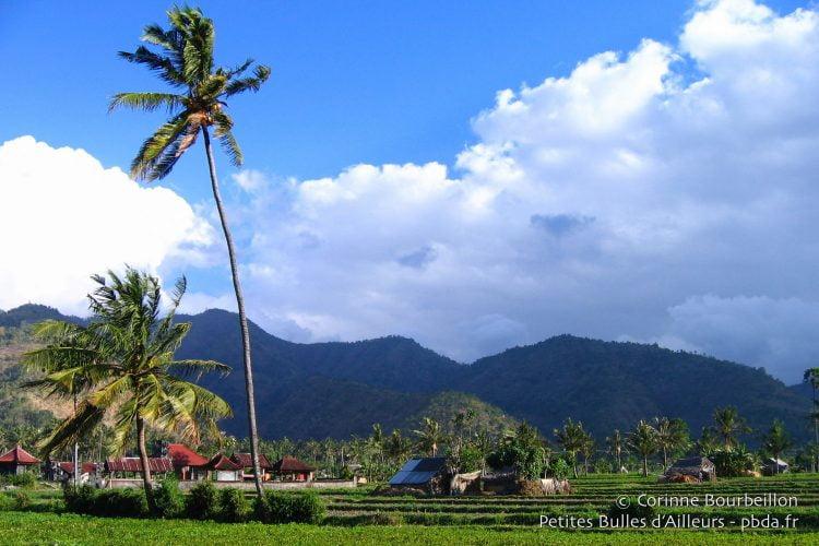 Champs et petites fermes à Amed. (Bali, Indonésie, juillet 2008.)