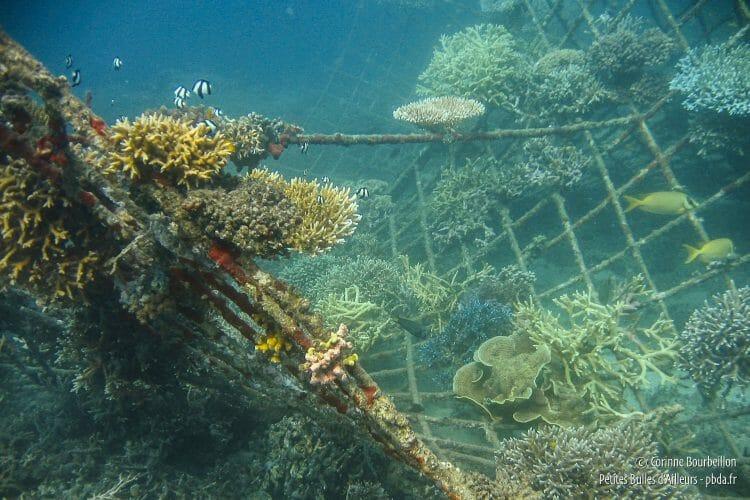 L'une des 48 structures métalliques sous-marines du projet Bio Rock à Pemuteran. (Bali, Indonésie, juillet 2008.)
