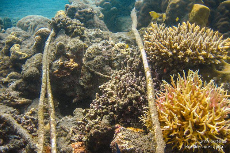 Les câbles électriques sous-marins du projet Bio Rock à Pemuteran. (Bali, Indonésie, juillet 2008.)