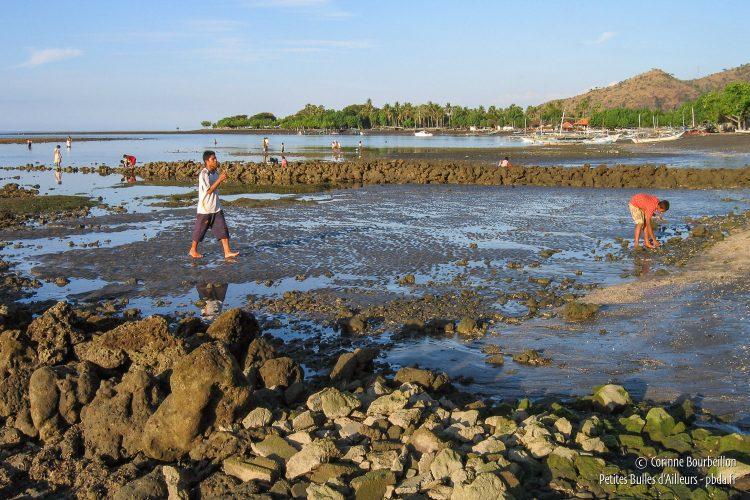 À marée basse, les gens de Pemeturan ramassent des coquillages sur la grève. (Bali, Indonésie, juillet 2008.)