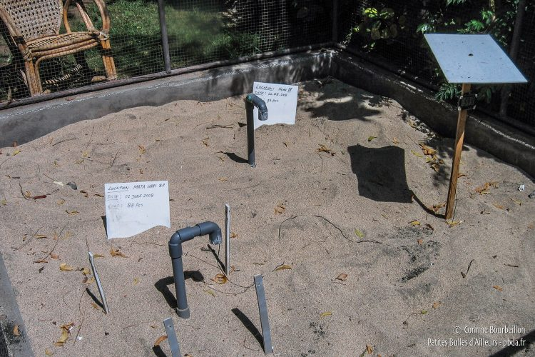 Buried under the warm sand, the turtle eggs are waiting to hatch. (Pemuteran, Bali, Indonesia, July 2008.)