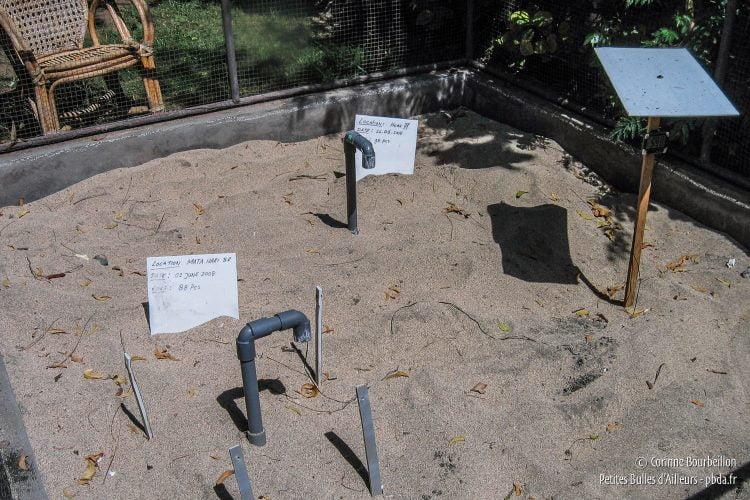 Enfouis sous le sable chaud, les œufs de tortue attendent d'éclore. (Pemuteran, Bali, Indonésie, juillet 2008.)