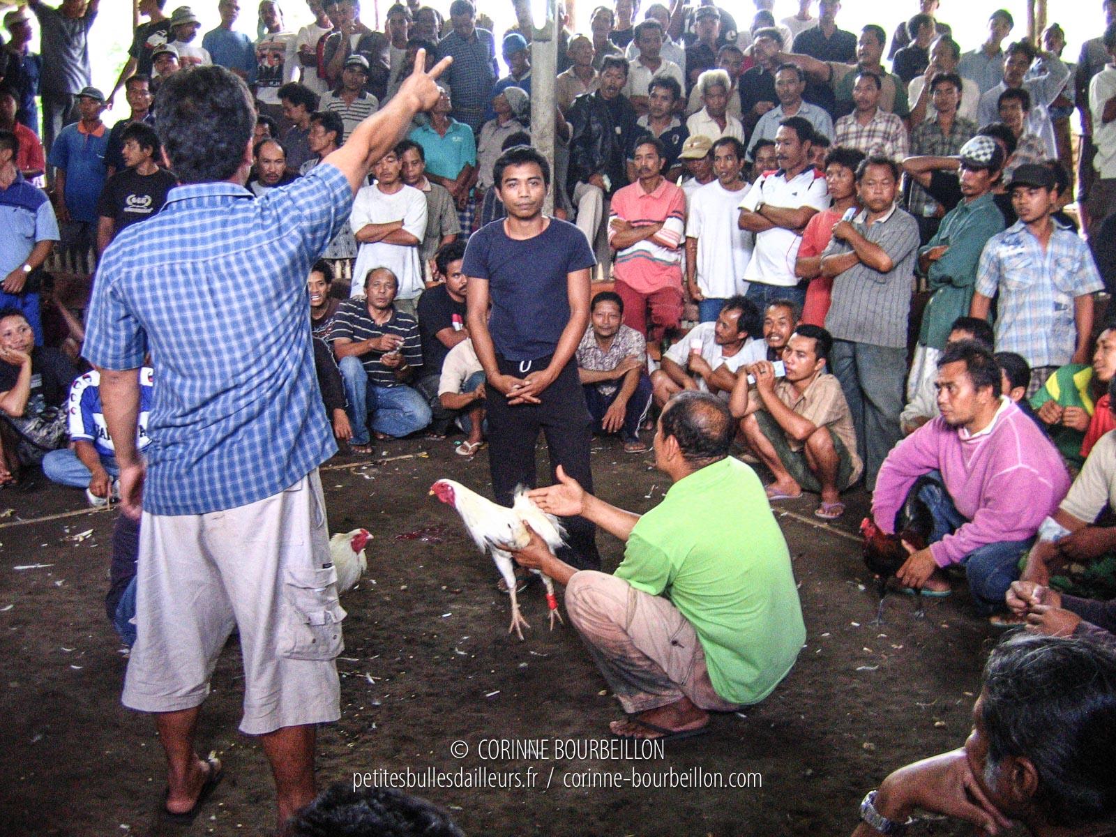 C'est le moment de faire des paris dans l'arène de combats de coqs, près d'Ujung. Région d'Amed et Amlapura. Bali, Indonésie, juillet 2008.