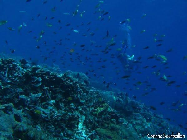 Crystal Bay. Nusa Penida, Bali, juillet 2008.