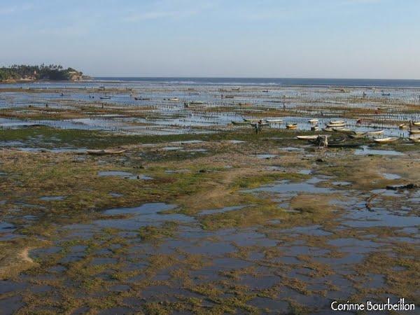 Le détroit entre Nusa Ceningan et Nusa Lembongan à marée basse. Bali, juillet 2008.