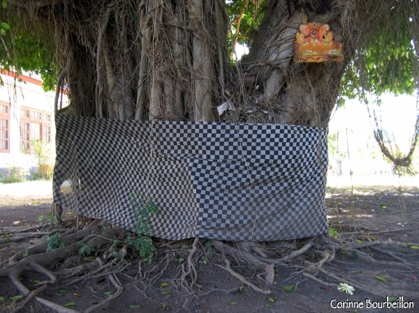 A black and white checkered sarong girdles the trunk of this sacred tree in Bali.