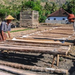 Les paludiers recueillent le sel dans des troncs de cocotiers évidés. (Amed, Bali, Indonésie, juillet 2008)