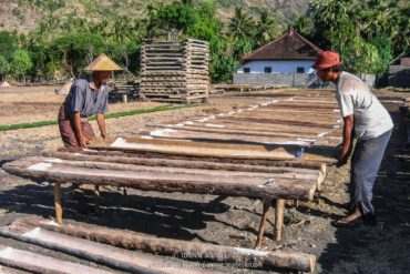 The salt workers collect the salt in hollow coconut trunks. (Amed, Bali, Indonesia, July 2008)