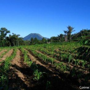 La campagne autour de Tomohon, avec, à l'horizon, le mont Lokon.