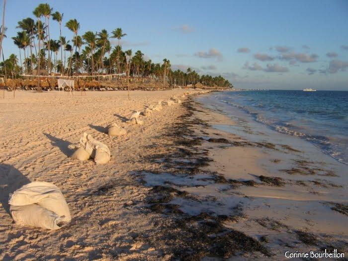 Tous les matins, la plage est nettoyée de ses débris végétaux et autres déchets déposés par la marée. (République Dominicaine, janvier 2009)