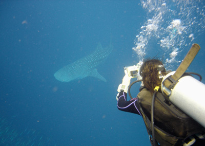 Me in front of a whale shark