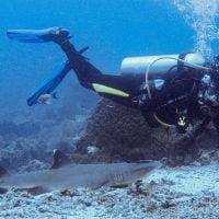 Requin à Sipadan. Bornéo, Malaisie. Juillet 2009.