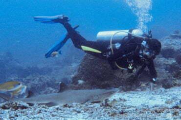 Shark in Sipadan. Borneo, Malaysia. July 2009.