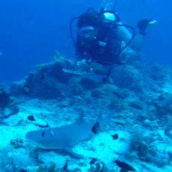 Shark in Sipadan.
