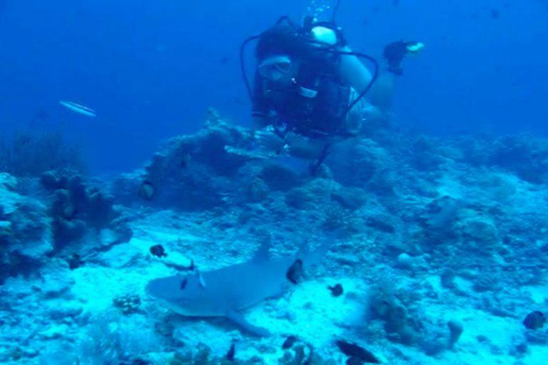 Requin à Sipadan.