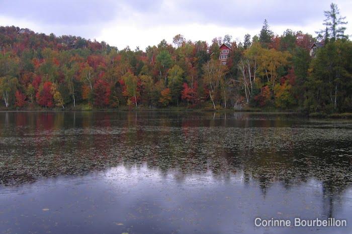 Autumn in the Laurentians (Saint-Bernard area, Quebec, Canada).