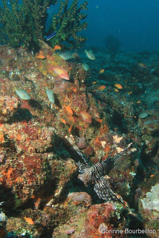 Pantee Peunateung, Pulau Weh. Sumatra, Indonésie. Mars 2010.