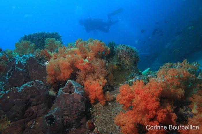 Balade le long du récif. (Bangka Island, Sulawesi, Indonésie. Juillet 2010.)