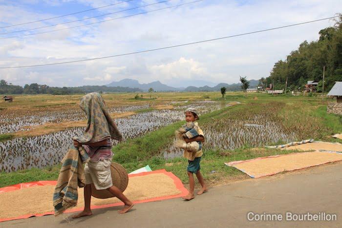 Sur la route de Bori. Pays Toraja, Sulawesi, Indonésie. Juillet 2010.