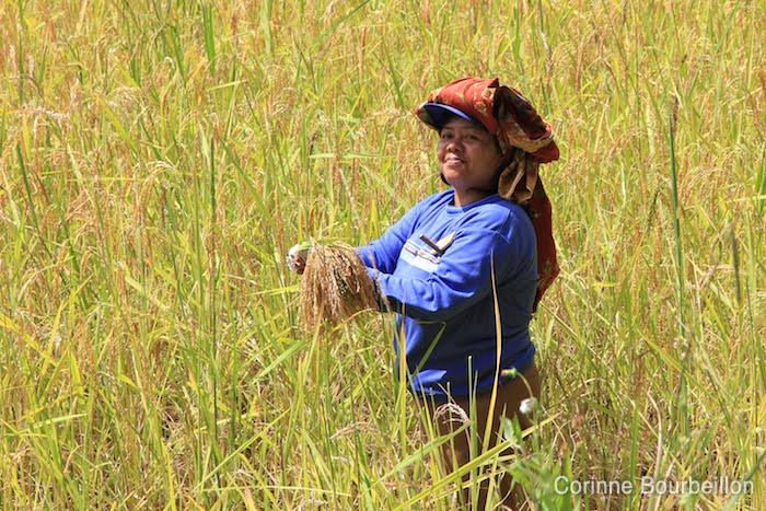 Batutumonga, Tana Toraja, Sulawesi, Indonésie. Juillet 2010.