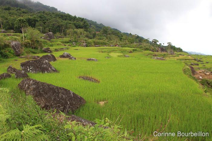 Batutumonga-Sulawesi-84