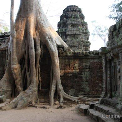 Ta Prohm. Angkor, Siem Reap, Cambodia. February 2011.