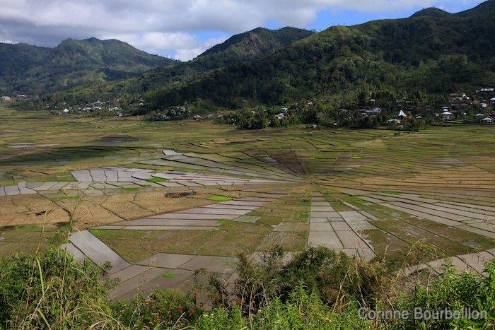 Rizières dans la région de Ruteng. Flores, Indonésie, juillet 2011.