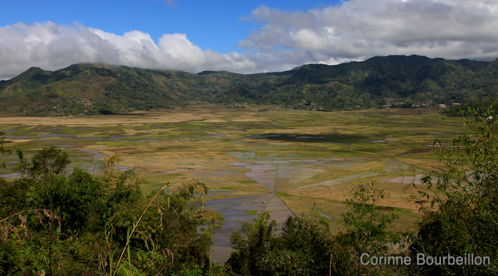 Rice fields in the Ruteng region. Flores, Indonesia, July 2011.