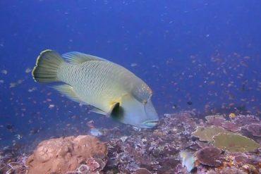 - Entre océan Indien et océan Pacifique, au cœur du Triangle de Corail, l'Indonésie est la plus belle des destinations pour la plongée sous-marine.
