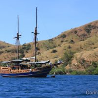 The Pascha. Cruise-dive in Komodo (Flores, Indonesia). July 2011.