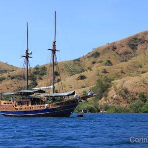 Le Pascha. Croisière-plongée à Komodo (Flores, Indonésie). Juillet 2011.