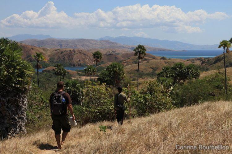 Rinca Island. Komodo National Park. Indonésie, juillet 2011.