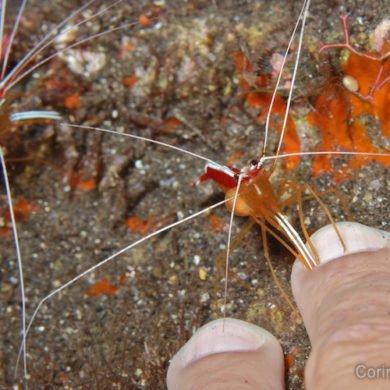 """Une """"shrimp manucure"""", ça vous dit ?"""