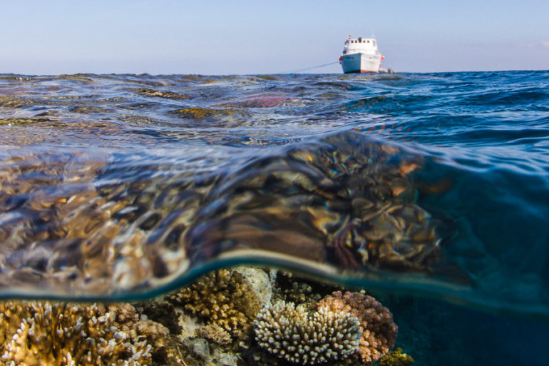 Plongée en Mer Rouge. Hamata, Égypte, novembre 2011.