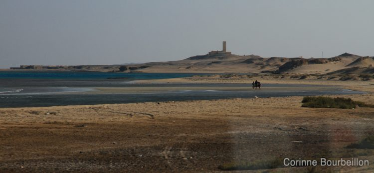 Near Hamata, southern Egypt, November 2011.
