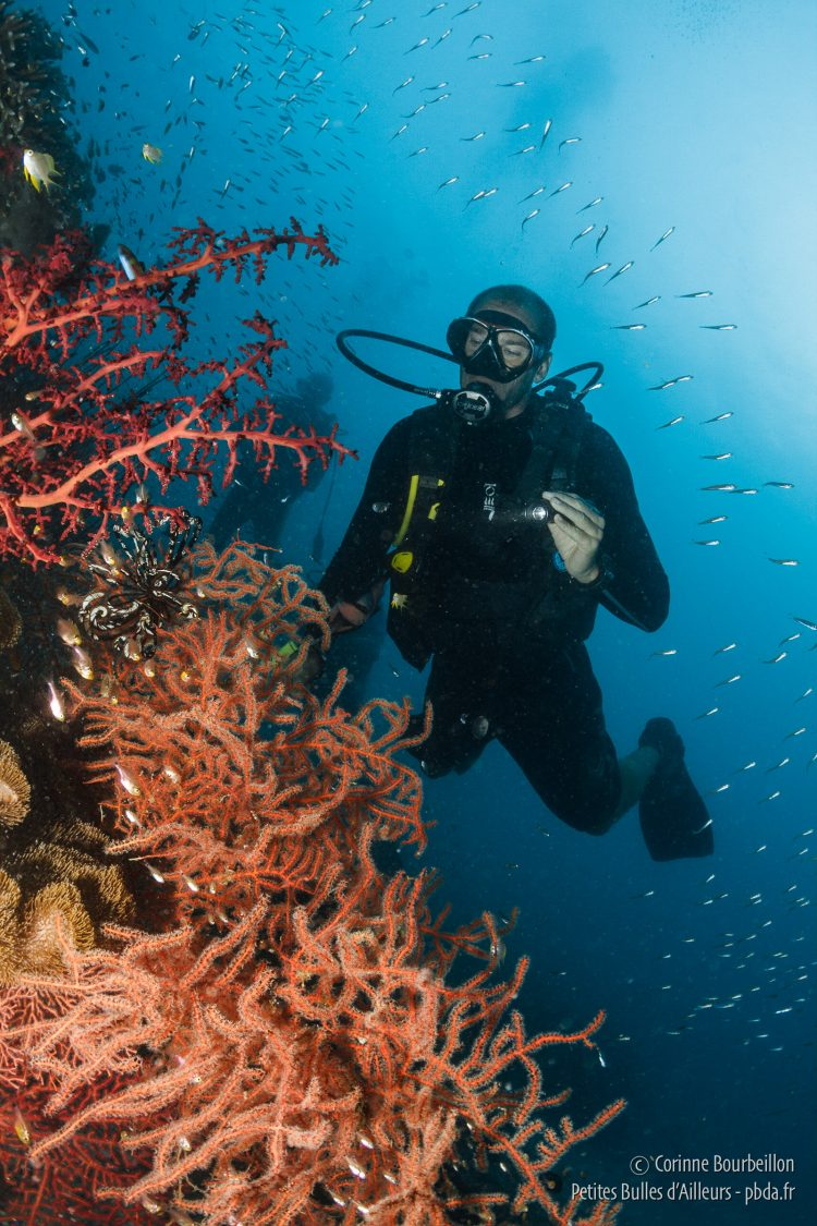 Cédric observes the corals. Raja Ampat, West Papua, Indonesia, March 2012.