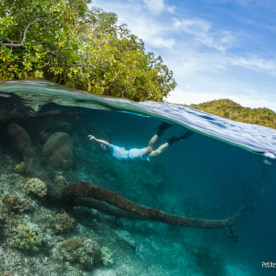 Under the surface, trees and coral meet ... (Raja Ampat, Papua, Indonesia, March 2012)