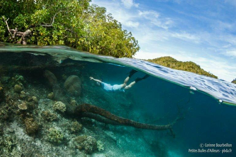 Sous la surface, les arbres et le corail se rencontrent... (Raja Ampat, Papouasie, Indonésie, mars 2012)