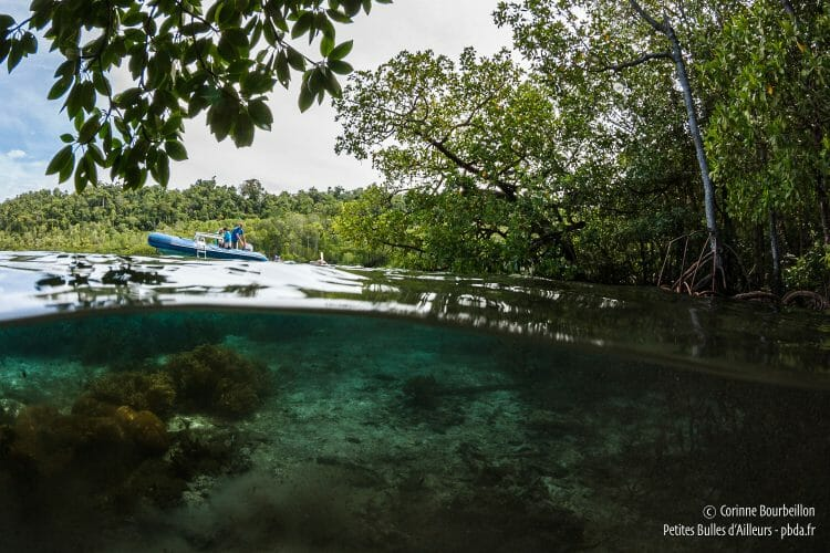 A world at once aquatic and vegetal. (Raja Ampat, Papua, Indonesia, March 2012)