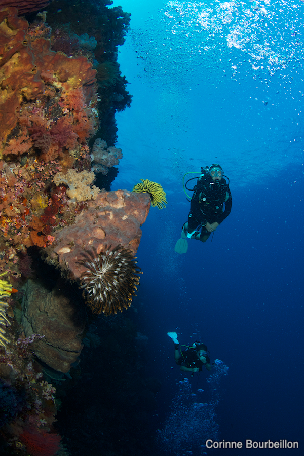 Diving in Alor. Indonesia, July 2012.
