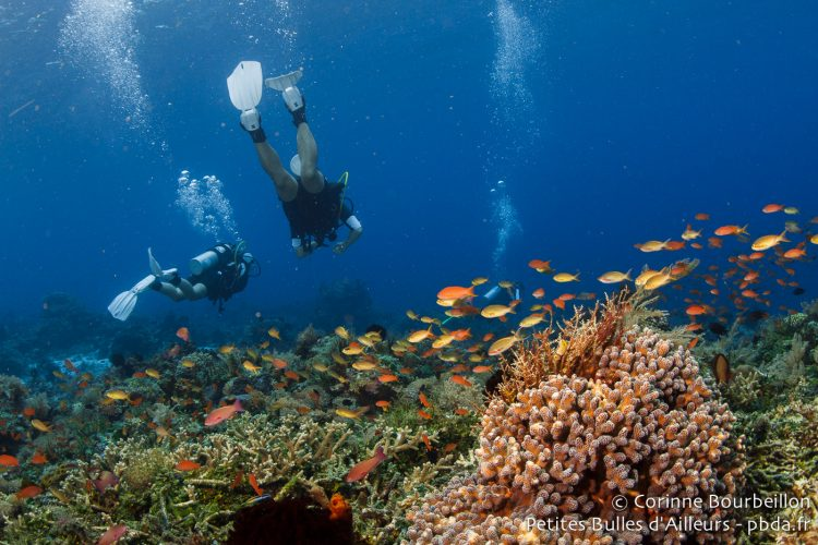 Diving in Alor. (Indonesia, July 2012)