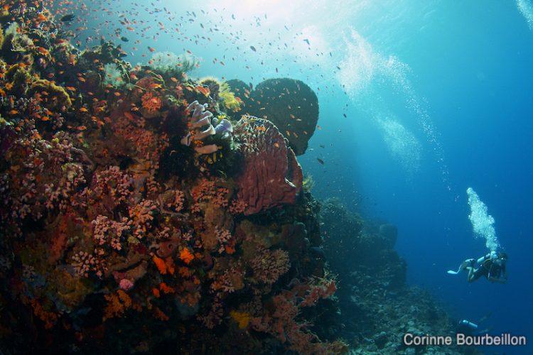Plongée à Alor. Indonésie, juillet 2012.