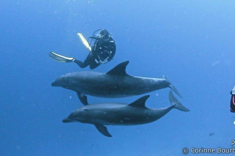 Katy danse avec les dauphins de Rangiroa. Polynésie, octobre 2012.