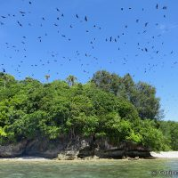 Mioskon Island: our arrival wakes up thousands of bats hidden in the trees. Raja Ampat. West Papua, Indonesia. July 2012.