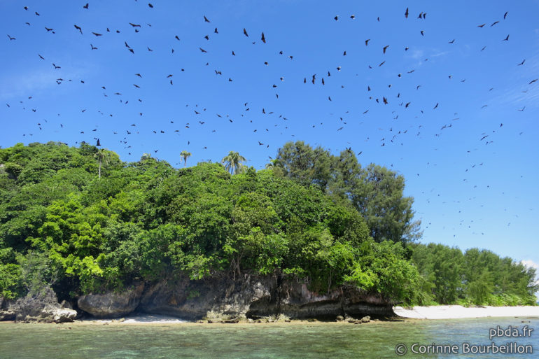 Our arrival in Mioskon awakens hundreds of bats hidden in the trees. (Raja Ampat, West Papua, Indonesia, July 2012)
